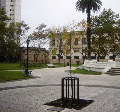A shoot or sprout of the Tree of Gernika, planted in the Plaza de la Merced by the local Basque community in Pergamino