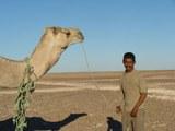 Cuidador de camellos, Sahara Occidental, Argelia, 2007.