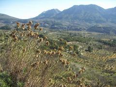 La vall de Seta