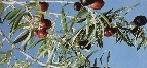 El MARM edita el manual 'Buenas prácticas en producción ecológica, cultivo del olivar'