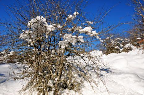 Aralar en Invierno