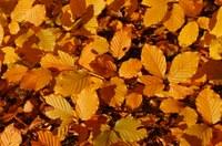 En marcha el concurso de fotografía digital sobra el otoño
