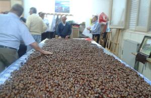 Más de 200 kilos de castañas fueron consumidas durante la celebración.