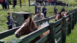 Xabier Cía marca a fuego el ganado del valle que pastará durante los meses de verano.
