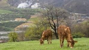Zabalgarbi se ubica en las faldas del monte Arraiz.
