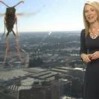 Una avispa 'mutante' se cuela y espanta a la presentadora del tiempo.