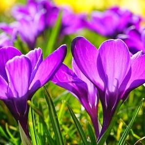 Flores en un campo durante la primavera.