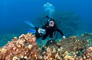 Bautismo de buceo en mar abierto
