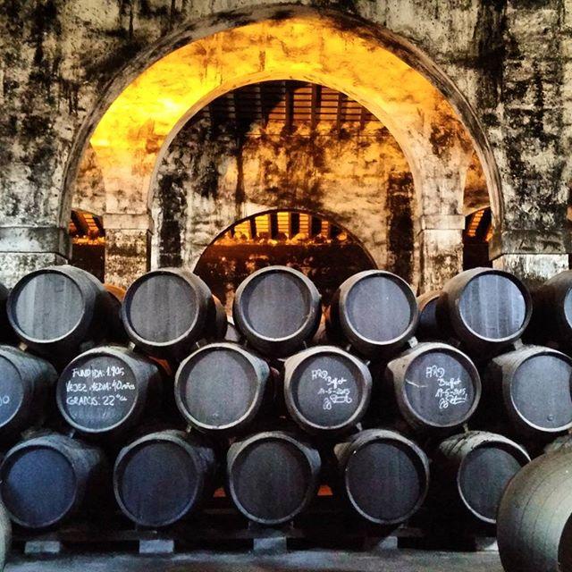 Bodegas Osborne #Wine #cádiz #winery #spain