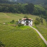 Vista de la Casa rural Basarte y sus viñedos