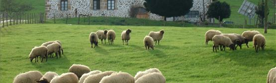 caserio errezabal ecomuseo pastoreo legazpi