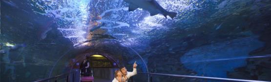 Museo Oceanográfico-Aquarium de San Sebastián