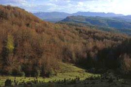 Izki alberga uno de los bosques de roble marojo de mayor extensión de Europa