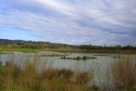 Plaiaundi sirve de refugio a aves migratorias