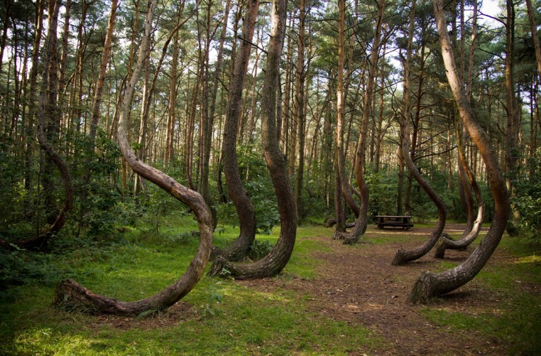 bosque torcido