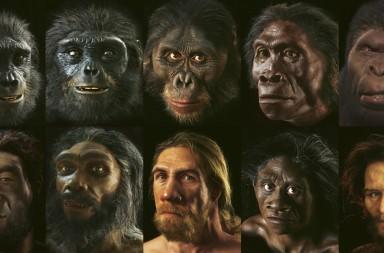 evolucion conocer ciencia homo