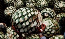El tequila, en peligro por su éxito