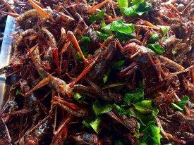 Cocinar insectos