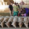 Escuela de pastores