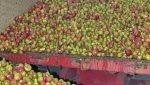 Descarga de la manzana