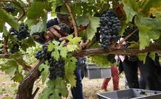 El Consejo valida la calificación de 'muy bueno' para el Rioja del 2017